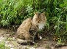 Серпуховский кот 2
