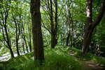По крепостному валу посажены деревья
