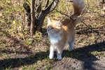 Палехская кошка