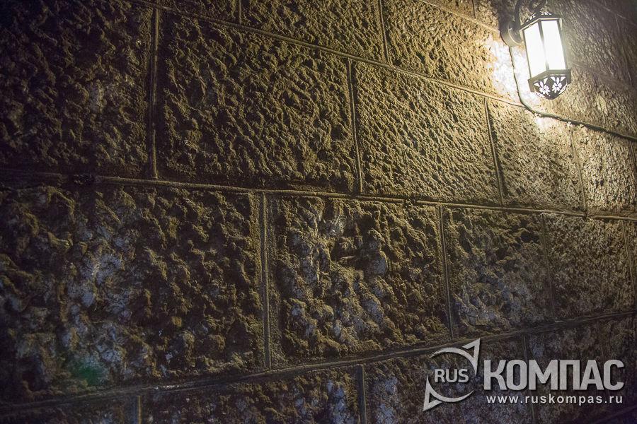 Благородная плесень на стенах подвала
