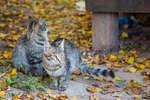 Тригорские кошки
