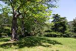 Верхний парк Воронцовского дворца