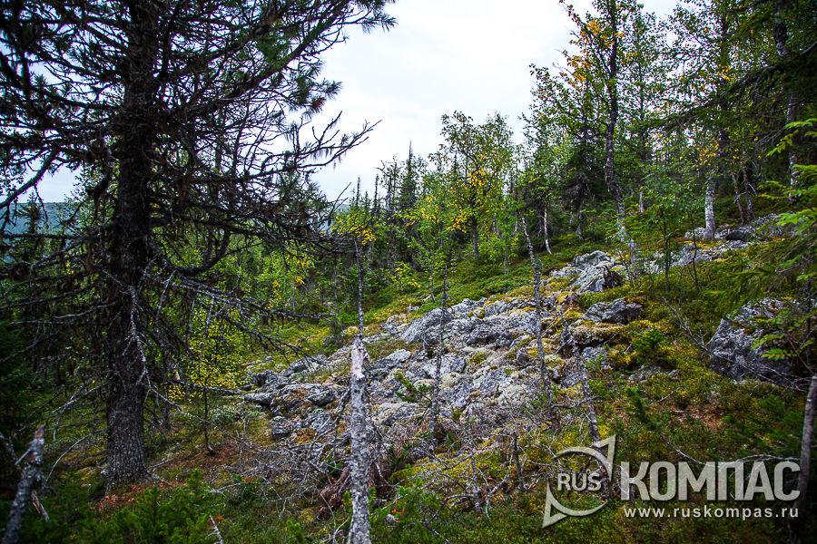 Камни в лесу, обросшие лишайниками