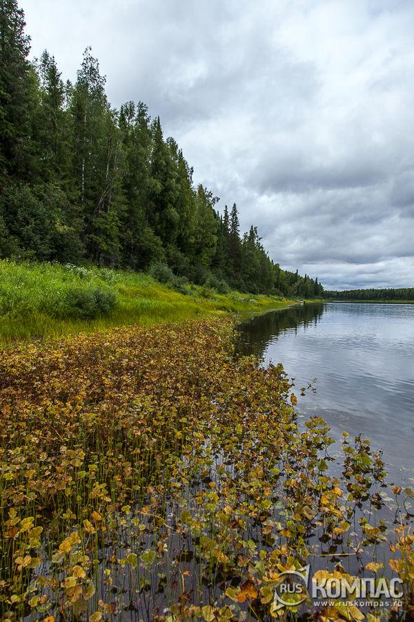 Леса по берегу реки Илыч