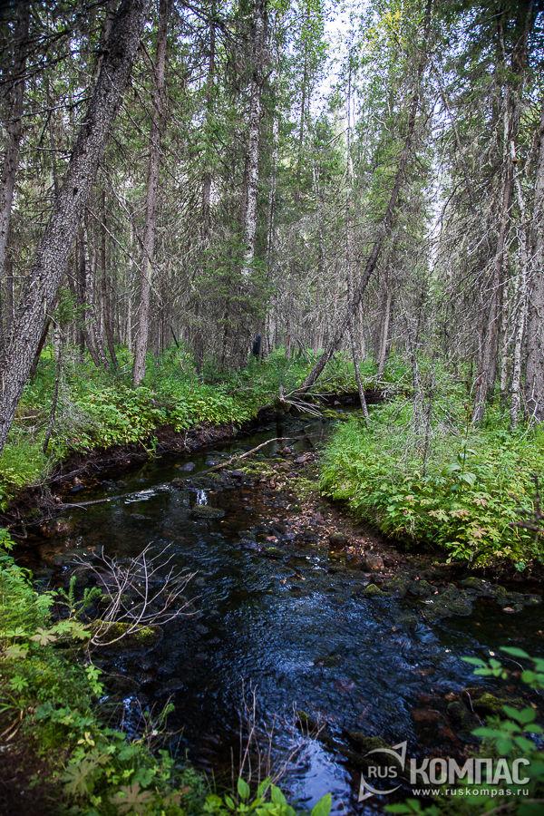 Ручьи в лесу