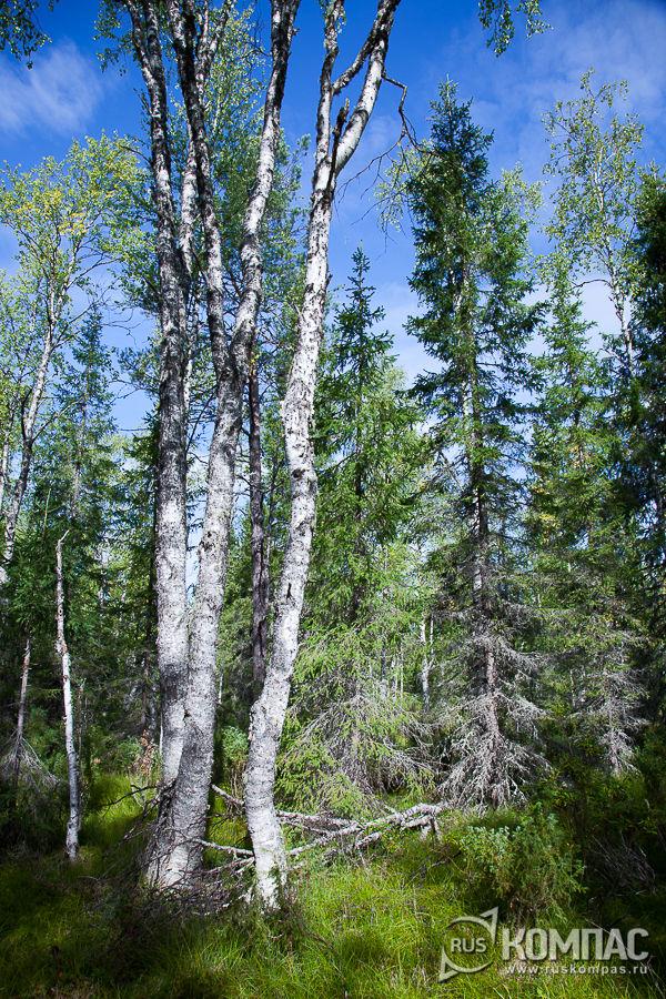 Старовозрастный смешанный лес