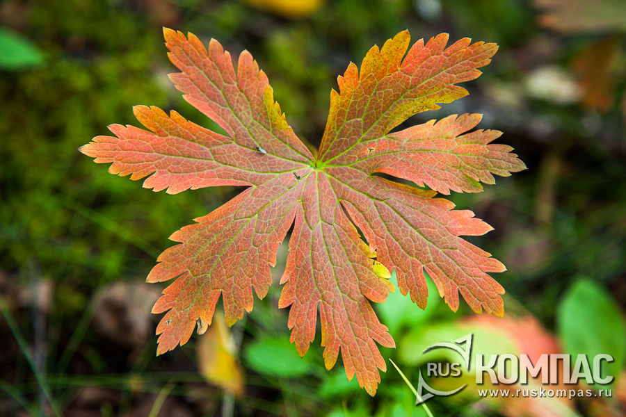Осенние краски в августе