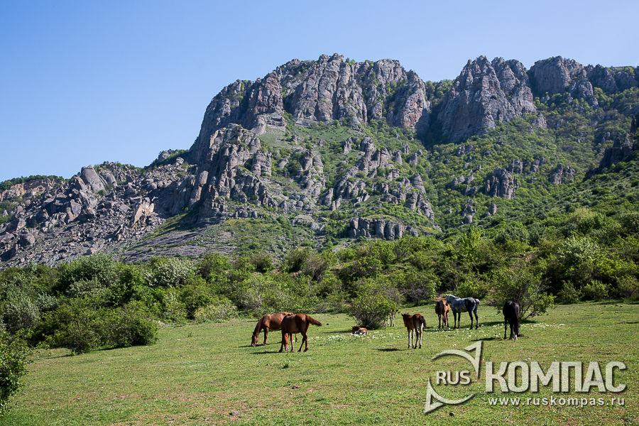 Лошади пасутся у подножия Демерджи