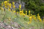 Цветущие склоны горы Демерджи