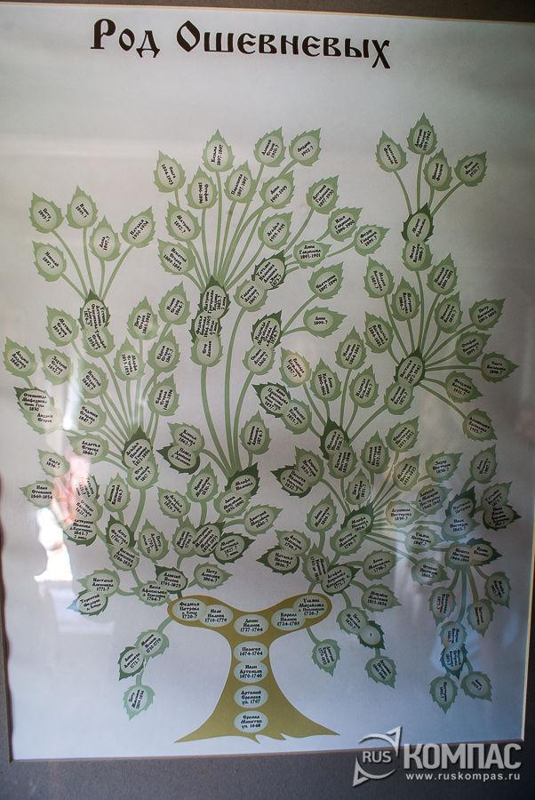Генеалогическое дерево Рода Ошевневых