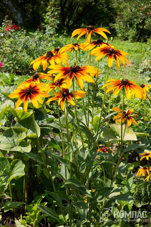 Цветы в саду усадьбы Мелихово
