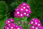 Цветы в усадьбе Мелихово