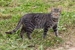 Мелиховский кот
