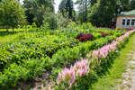 Огород «Юг Франции».перед главным домом усадьбы