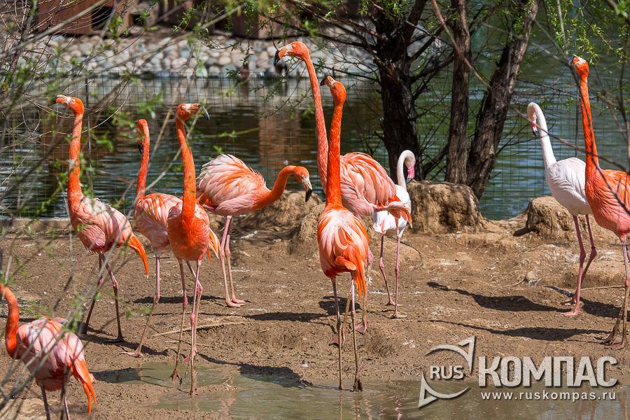Вольер с фламинго