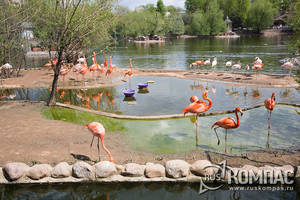 Вольер фламинго вблизи большого Пресненского пруда