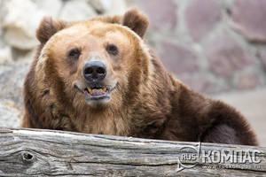 Московский зоопарк (Новая территория)