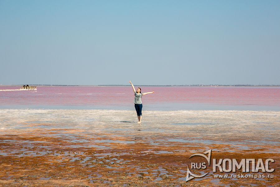 Ветер гонит розовую волну к берегу Сасыка