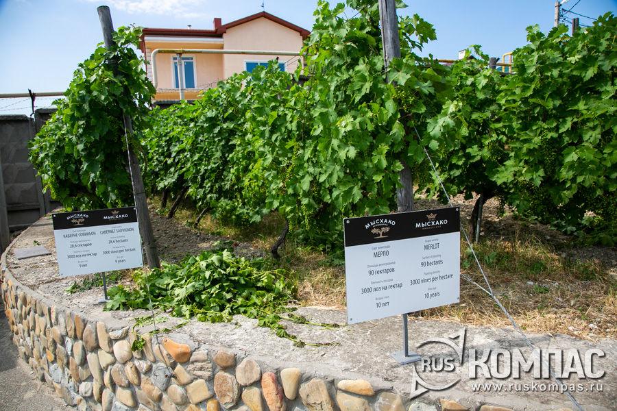 На табличках указаны сорта винограда, из которого делают вино на винодельне